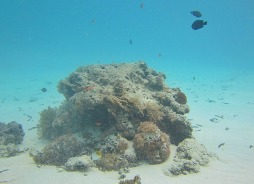 1.1325839678.coral-outcrop