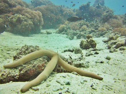 1.1325839678.starfish