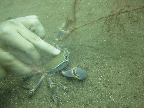 1.1326560202.crab