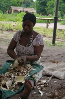 1.1326560202.cutting-cassava
