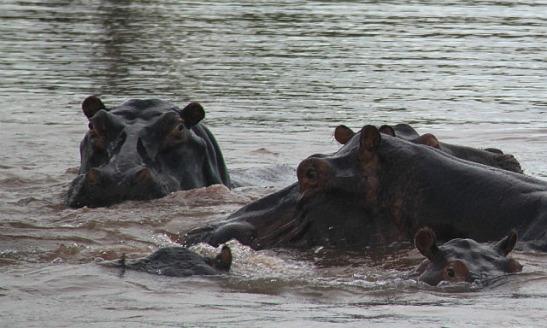 1.1327005298.3-hippo