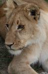 1.1327138348.3-lions