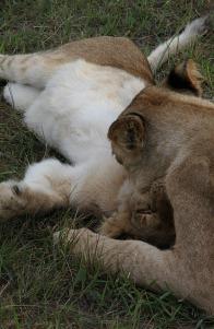 1.1327138348.5-lions